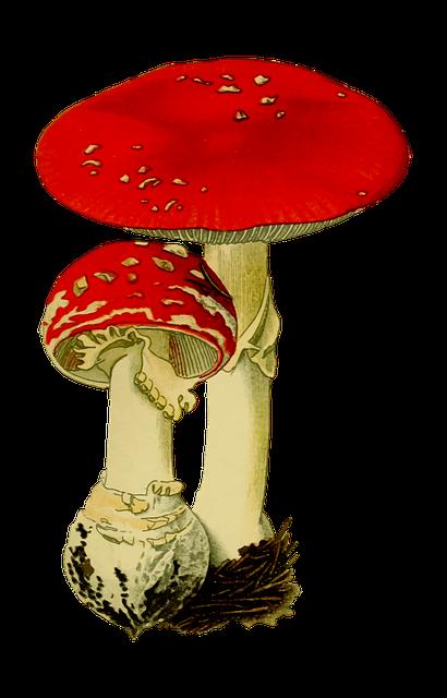 Fungi, Fungus, Hallucinogenic, Mushroom, Poison