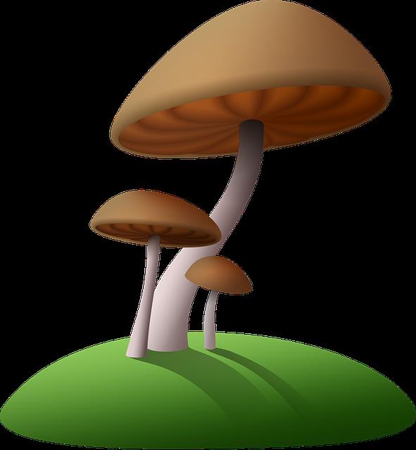 Mushrooms, Cartoon, Fungus, Simple, Plants