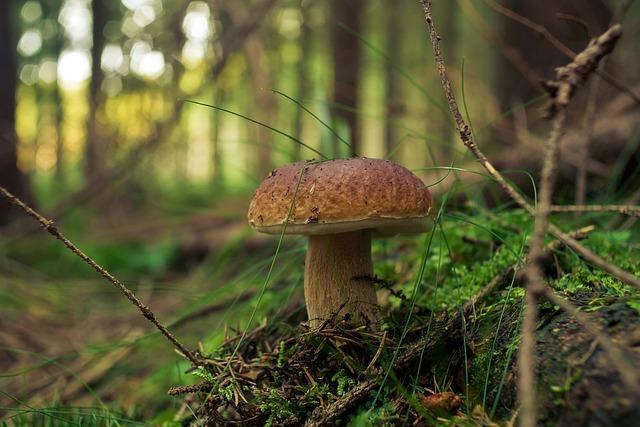 Fungus, Forest, Nature, Boletus, Mushrooms, Genuine
