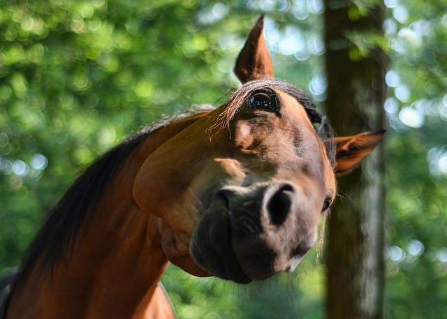 Horse, Funny, Curious, Head, Equine, Fun, Animal, Green