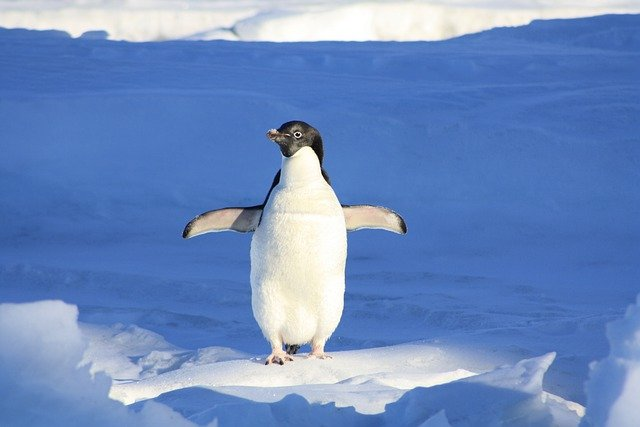 Penguin, Funny, Blue, Water, Animal