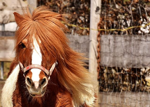 Pony, Horse, Cute, Animal, Funny, Nature, Seahorses