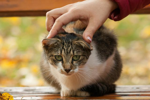 Cat, Autumn, Bank, Hands, Funny, Leaves, Nature, Out