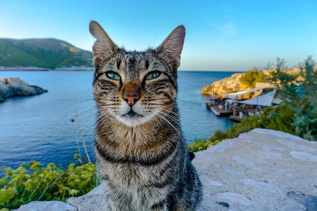 Cat, Sea, Mallorca, Fur, Coast, Water, Animal, Wall