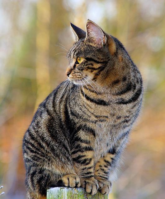 Cat, Female, Fur, Mackerel, Watch, Elevated, Portrait