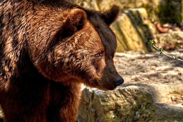 Bear, Mammal, Animal World, Nature, Animal, Wild, Fur