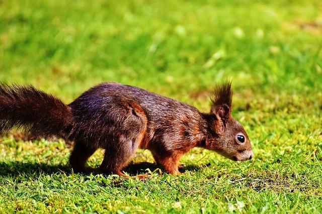 Squirrel, Nager, Nature, Close, Cute, Rodent, Fur