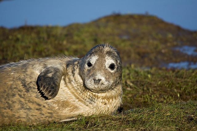 Seal, Closeup, Wildlife, Mammal, Nature, Beach, Fur