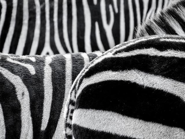 Zebra, Fur, Animals, Black And White, Striped, Africa