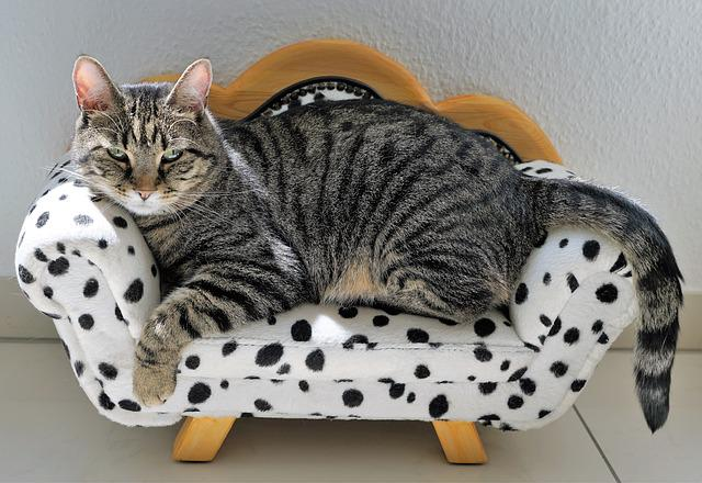 Cat, Tiger, Sofa, Dalmatians, Dog, Furniture, Couch