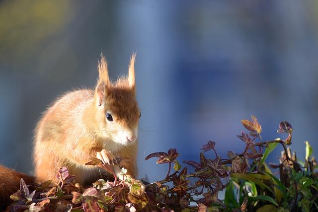 Squirrel, Croissant, Autumn, Furry, Rodent, Light, Blue