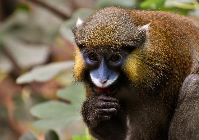 Monkey, Animal, Furry, Wildlife Photography, Portrait