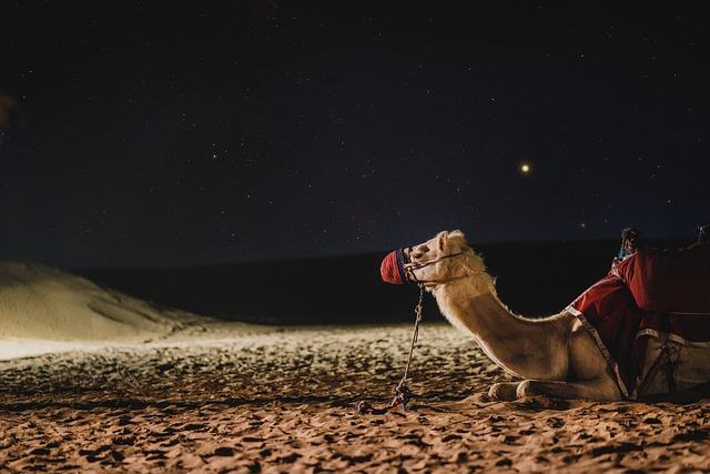 Camel, Galaxy, Dubai, Darkness, Milkyway