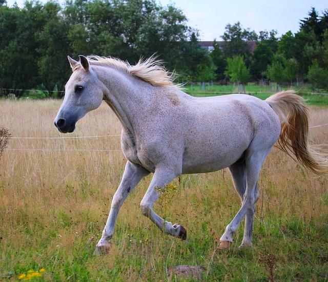 Horse, Gallop, Pasture, Summer, Mold