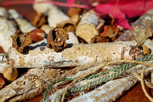Acorns, Tree Fruit, Infected, Galls, Cut In Half