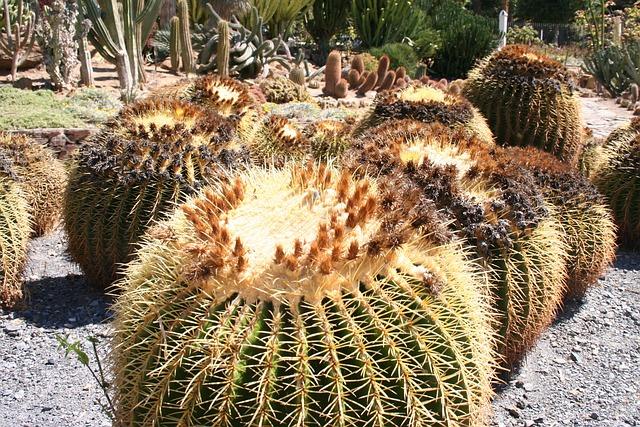 Cactus, Plant, Garden, Mexican Plant, Aechmea Plant