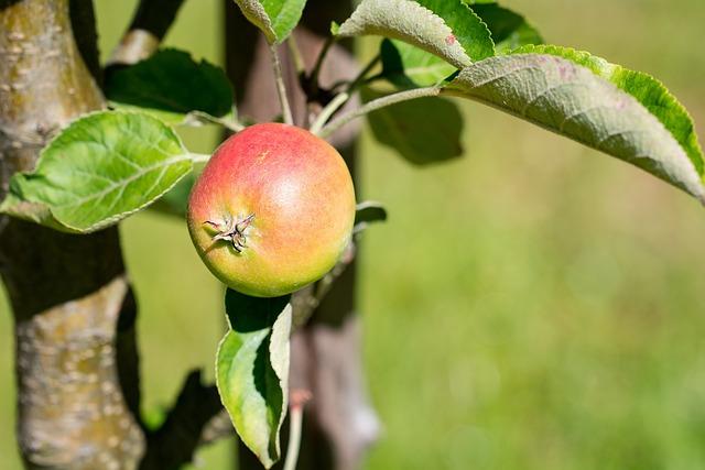 Apple, Bio, Bio Apple, Garden, In The Garden