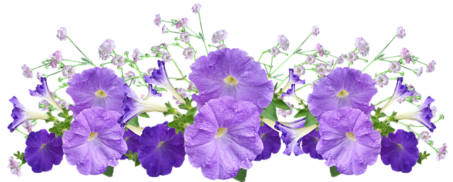 free photo garden arrangement flowers petunia max pixel