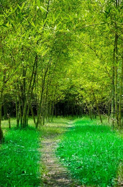 Bamboo, Garden, Road, Green