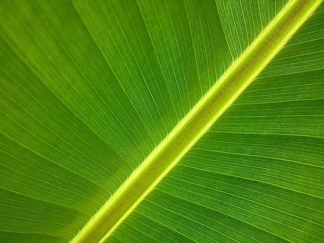 Banana Tree, Garden, Leaf