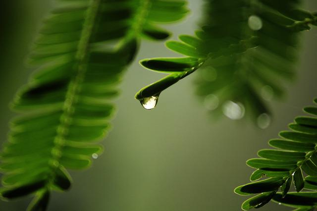 Water, Nature, Rain, Droplet, Beautiful, Garden