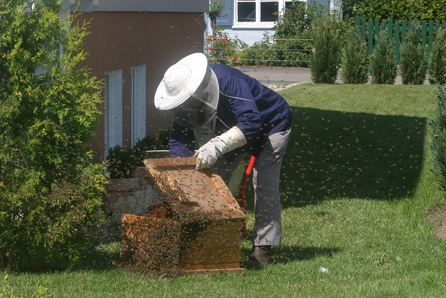 Beekeeper, Bees, Garden, Honey Bees, Bee Keeping