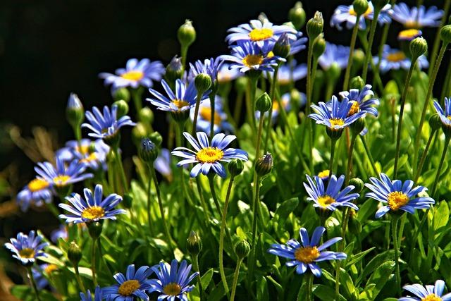 Flowers, Shrub, Blossom, Bloom, Garden, Bloom, Flora