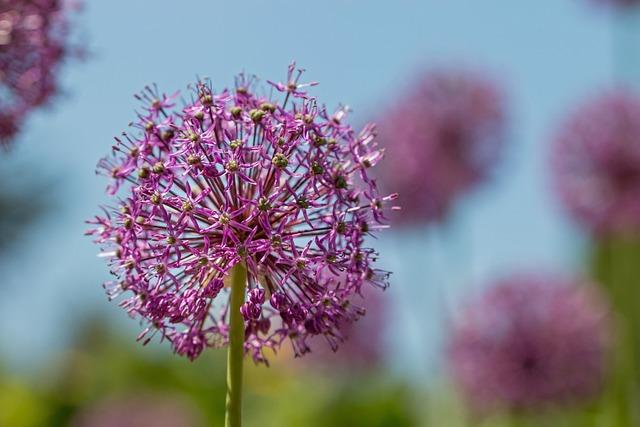 Flower, Garden, Flora, Summer, Pink, Botanical Garden