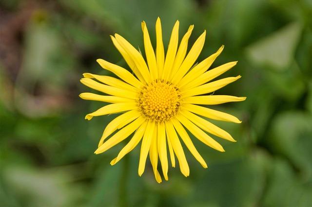 Nature, Plant, Flower, Summer, Garden, Bright, Leaf