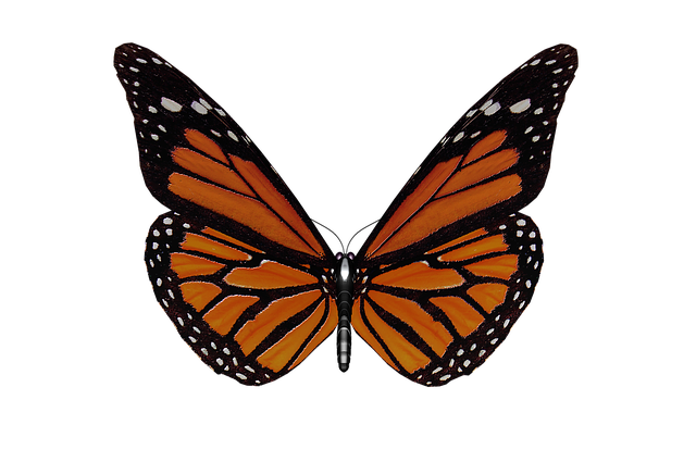 Butterfly, Wings, Garden, Butterfly Wings, Insect, Mud