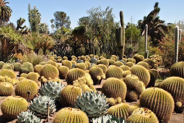 Cactus, Garden, Huntington, Nature, Botanical, Cacti