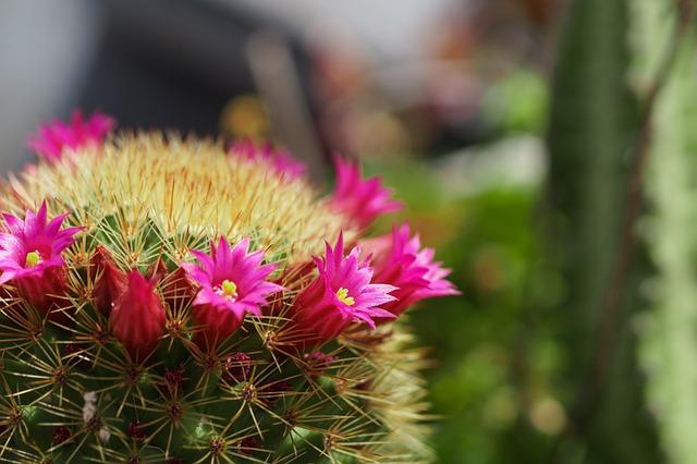 Cactus, Garden, Thorns, Mexico
