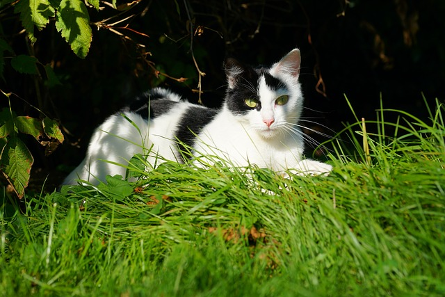 Cat, Female, Garden, Late Summer, Domestic Cat