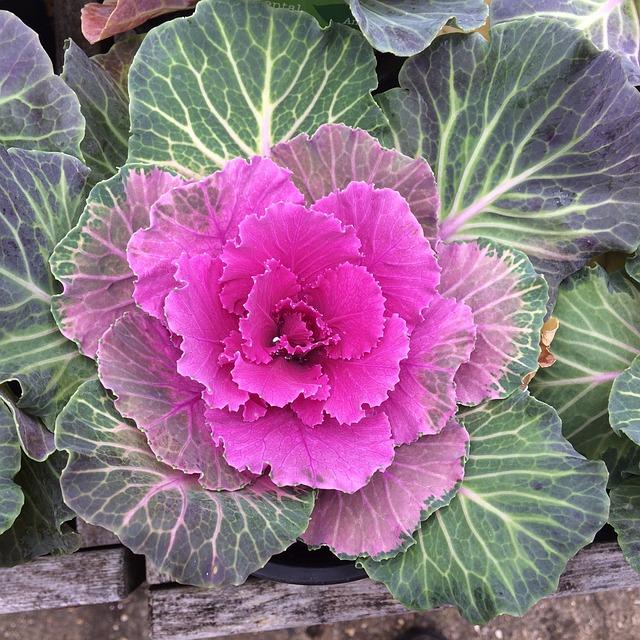 Flora, Nature, Leaf, Garden, Color, Freshness, Growth