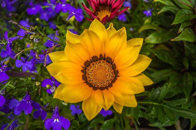 Colorful Flowers, Nature, Garden