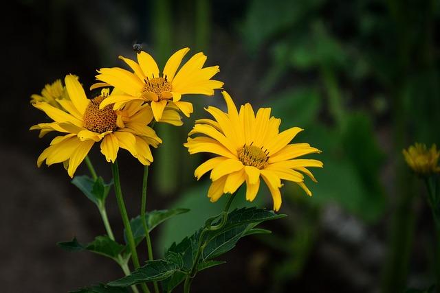 Beauty, Yellow, Flowers, Detail, Insect, Garden, Summer