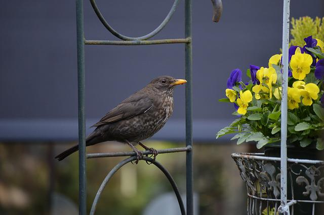 Nature, Garden, Birds, Blackbird, Feathers