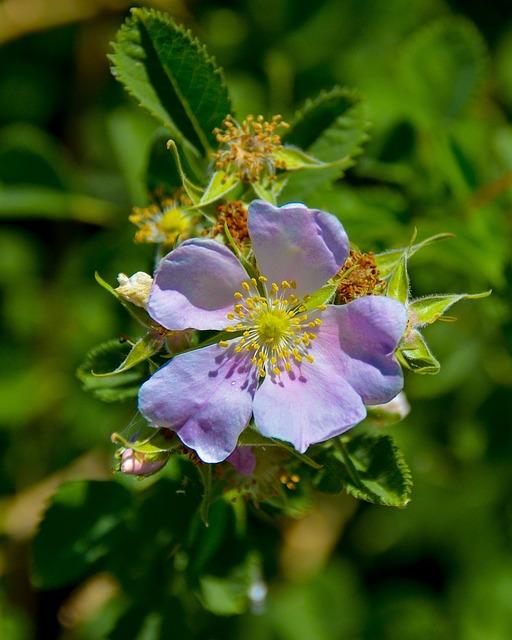 Flower, Flora, Nature, Garden, Blooming, Botanical