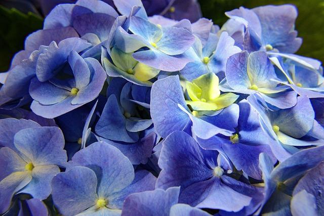 Flower, Nature, Flora, Garden, Floral, Leaf, Decoration