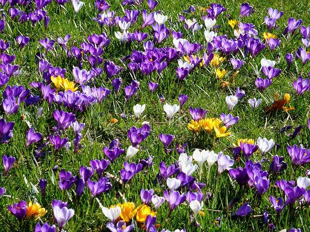 Blue, Flower Bracts, Early Bloomer, Spring, Garden