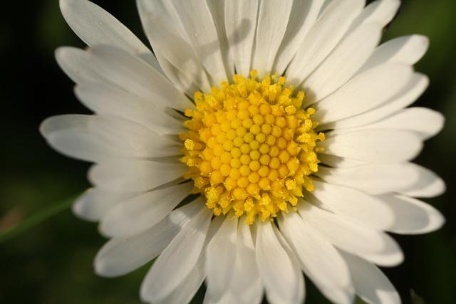 Nature, Flower, Plant, Close, Garden