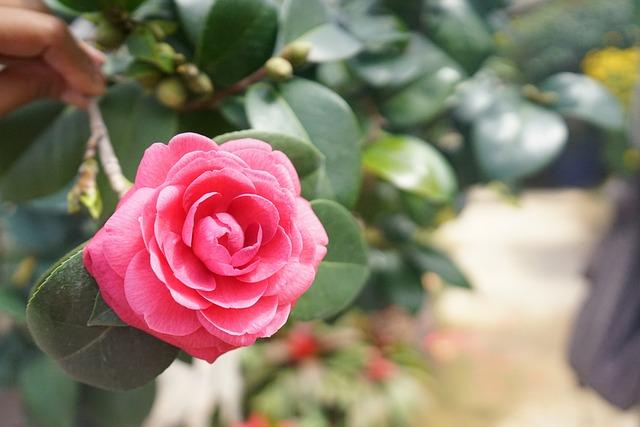 Flower, Tree, Flowers, Garden