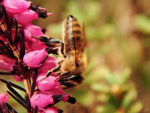 Bee, Macro, Spring, Nature, Garden, Flower, Insect