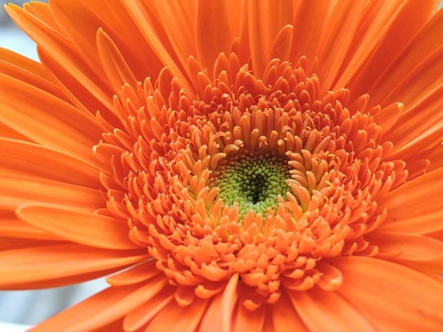 Flower, Nature, Garden, Flowers, Orange, Wild Flowers