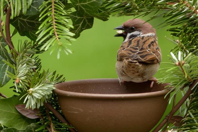 Sparrow, Passer Domesticus, Bird, Garden, Foraging