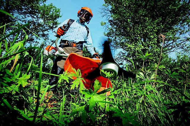 Garden, Grass Cutter, Gardening, Grass, Man, Outdoors