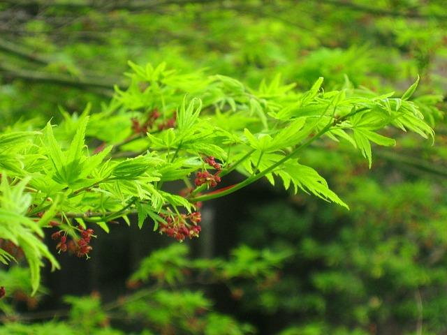 Green, Leaf, Branch, Hotel, Garden, City, Tokyo