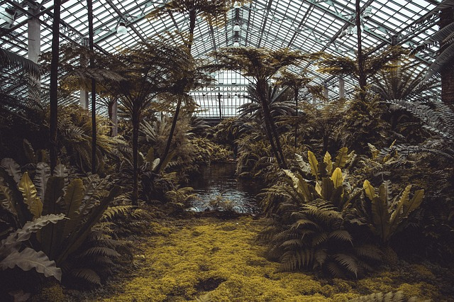 Conservatory, Green, Trees, Plants, Greenhouse, Garden