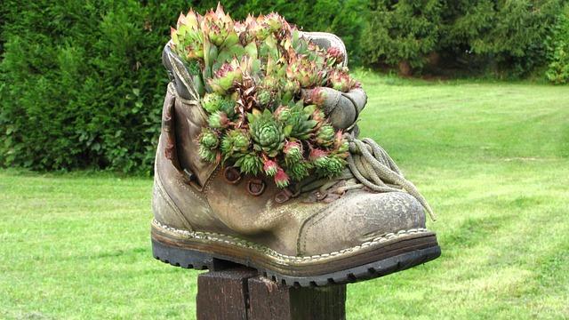 Shoe, Plant, Deco, Age Shoe, Houseleek, Garden, Green