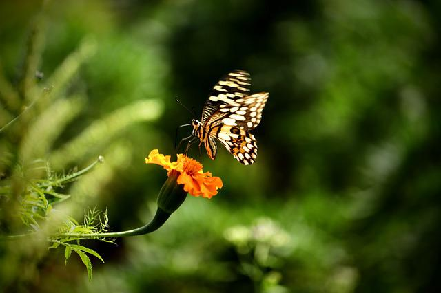 Nature, Outdoors, Insect, Flora, Butterfly, Garden
